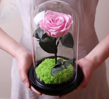 Страхотен подарък за една дама - магични красиви рози под стъклен похлупак